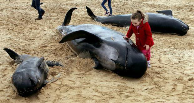 как умирают киты фото