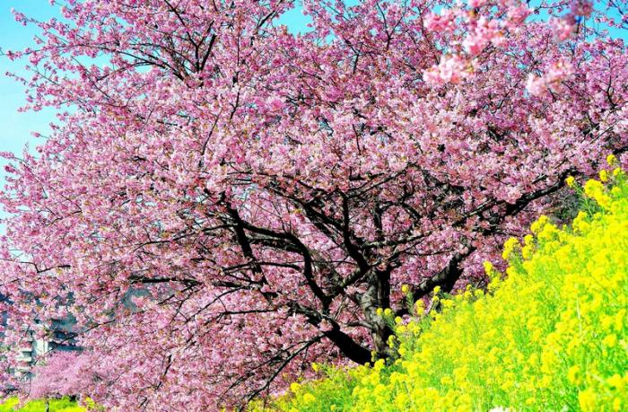 Картинки красот природы