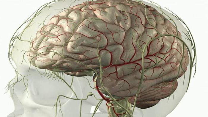 черепные нервы 12 пар анатомия таблица функции