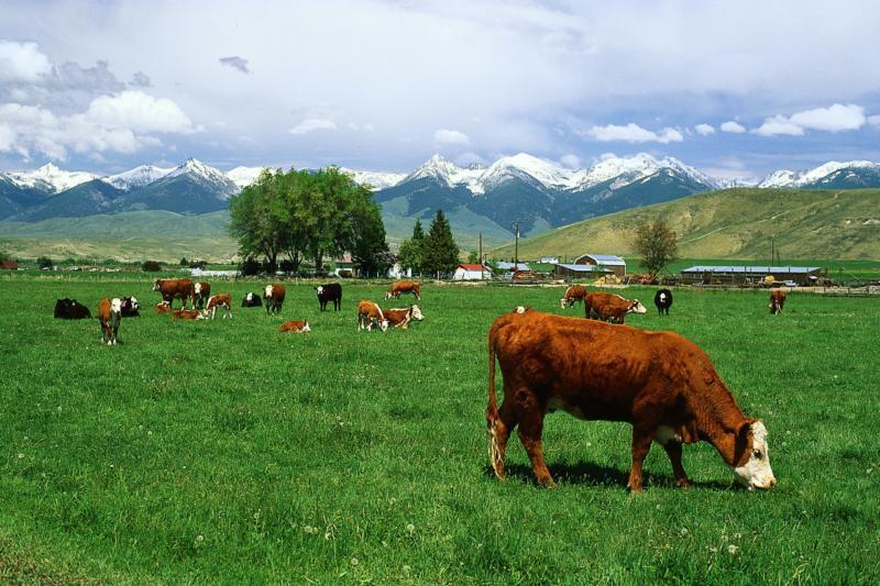 На каких землях сельхозназначения можно строить