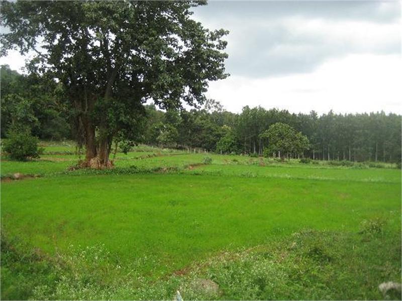Какой дом можно строить на землях сельхозназначения