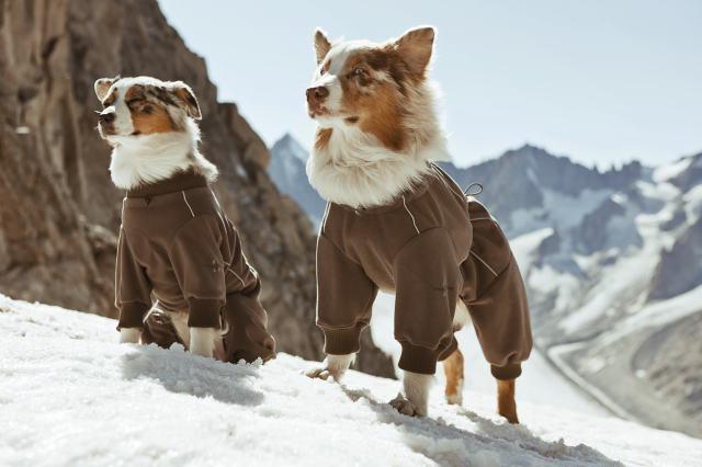 комбинезоны для крупных собак