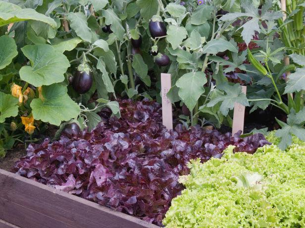 совместимость овощей и зелени на грядках