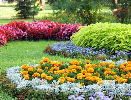 Цветы которые сажать в грунт 87