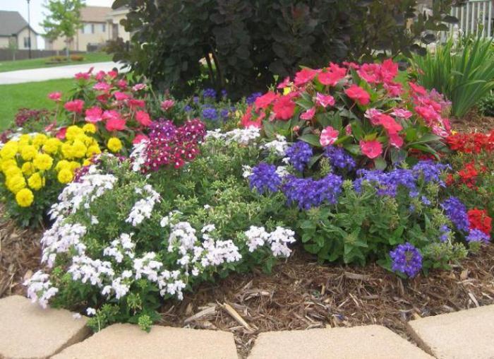 Где сажать цветы? Неприхотливые цветы для дачи
