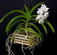 Горшок для орхидеи своими руками