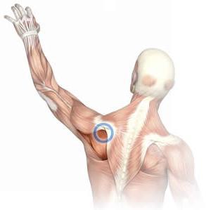 Народные рецепты от отложения солей в коленном суставе мышцы подтаранного сустава