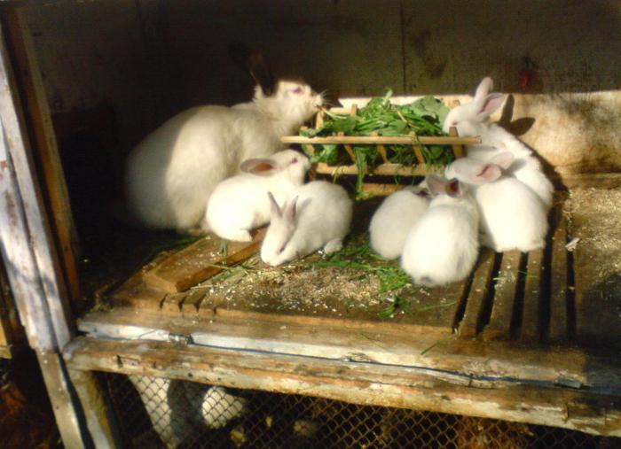 инструкция по применению молочной кислоты для кроликов img-1