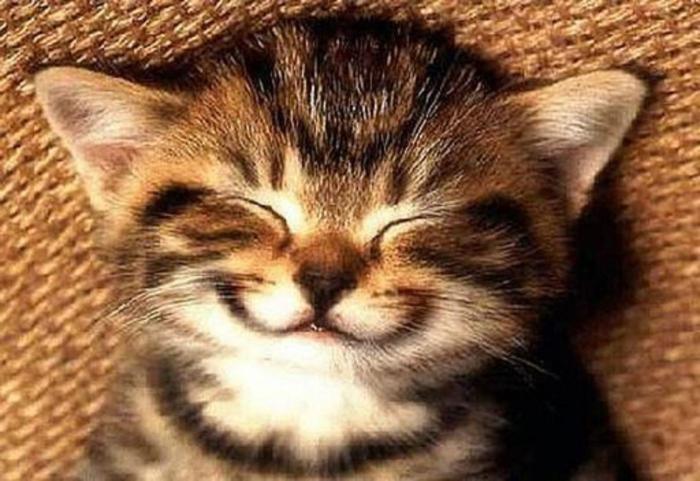 Стишки прикольные смешные для настроения