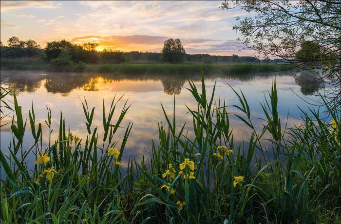 где находится река оскол