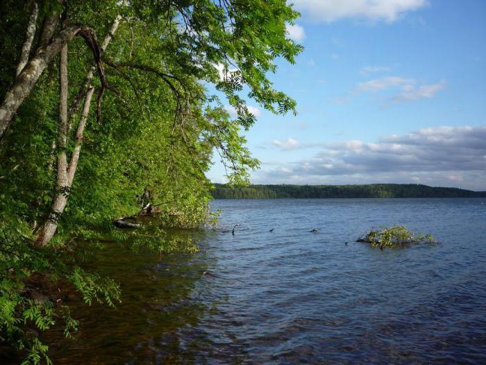 озеро глубокое ленинградская область отзывы