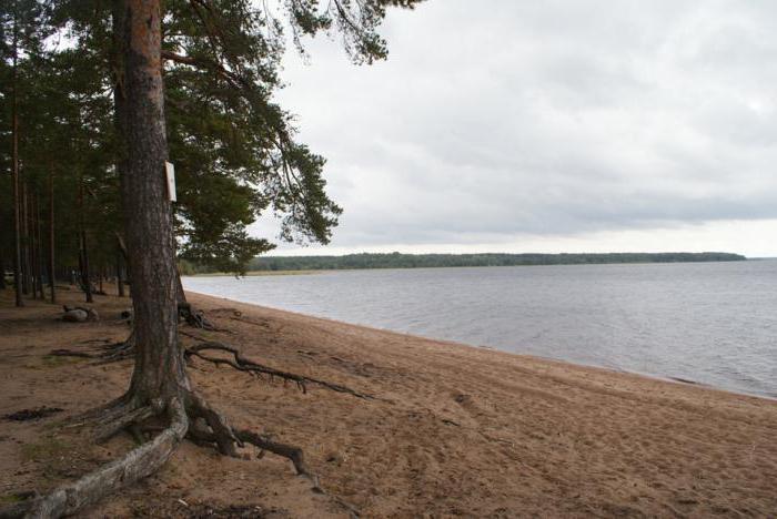 озеро глубокое ленинградская область кингисеппский район как проехать
