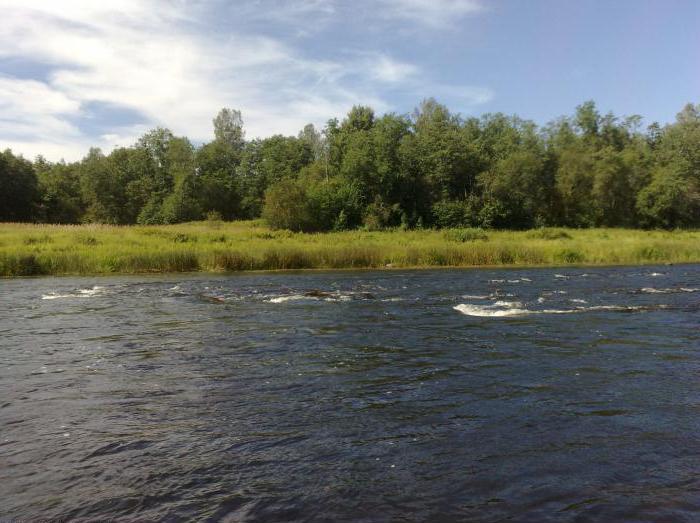 реки ленинградской области