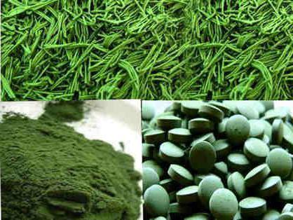 хлорелла фото водоросль
