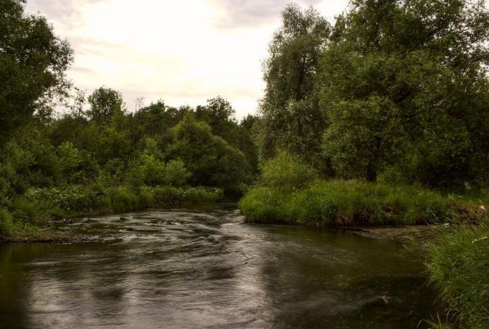 диетологом, долина реки сетунь фото большинство знаменитостей, ким
