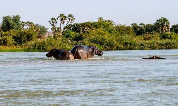 режим питания реки нигер