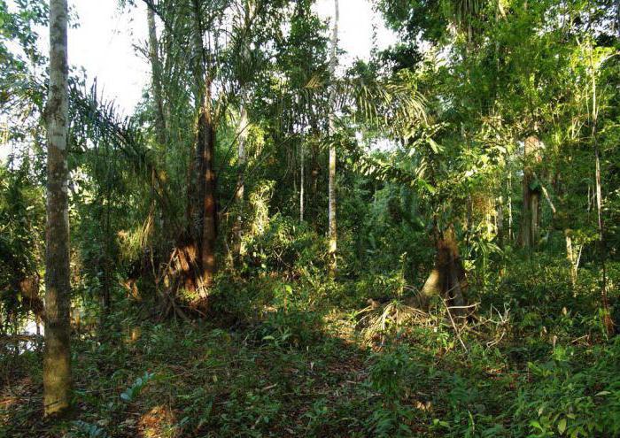 описать амазонскую низменность