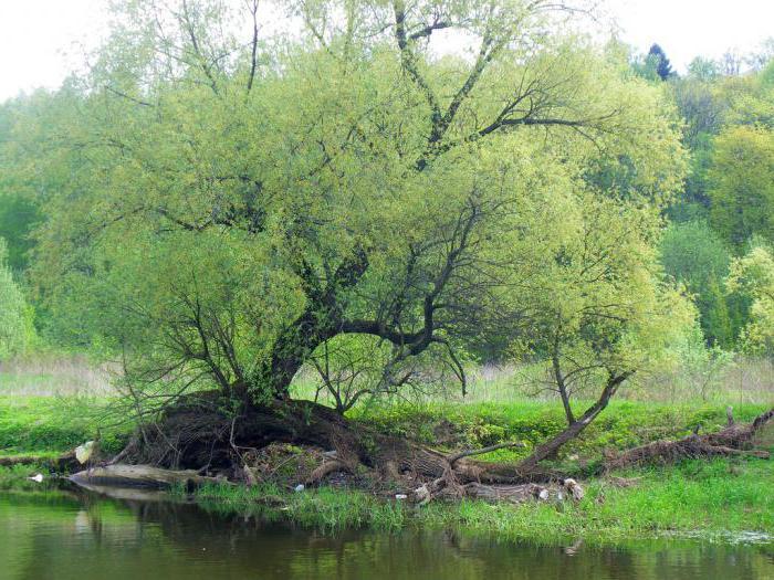долина реки сходня