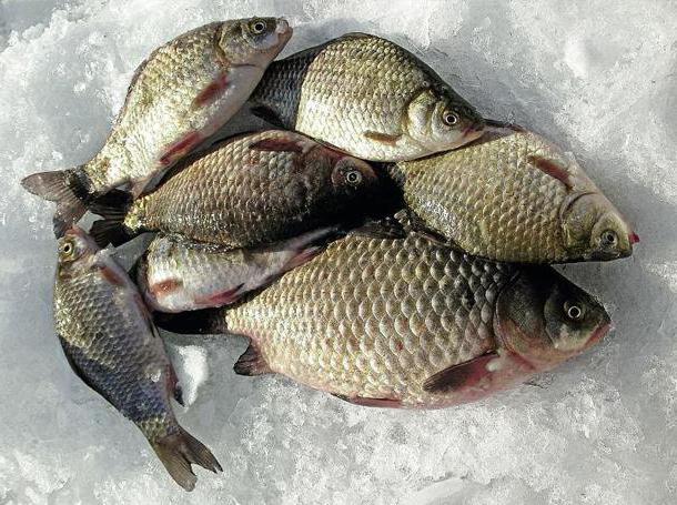 рыбалка на витиме