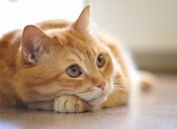 у кошки рак молочной железы что делать