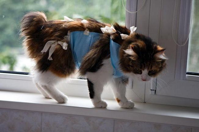сколько живут кошки с раком молочной железы