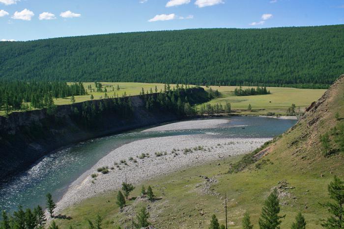 река ока растения и животные