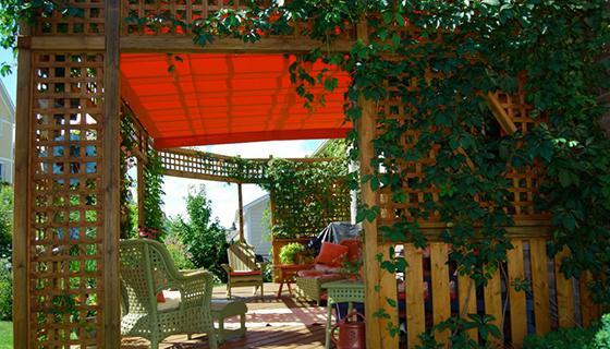 шторы из живых растений