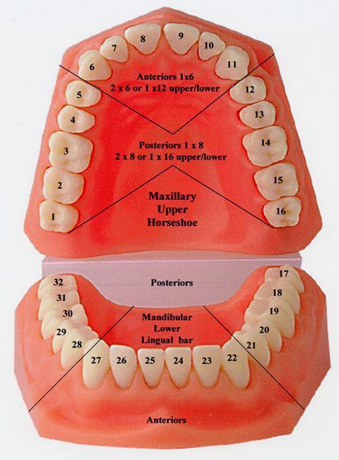счет зубов в стоматологии картинки великая вещь, она