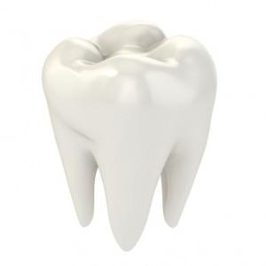 название корней зубов