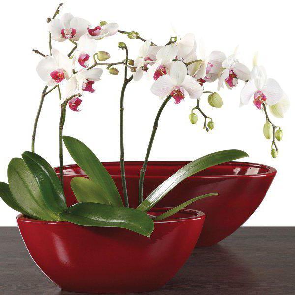орхидея уход после цветения пересадка