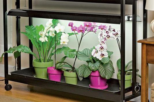орхидея после пересадки уход