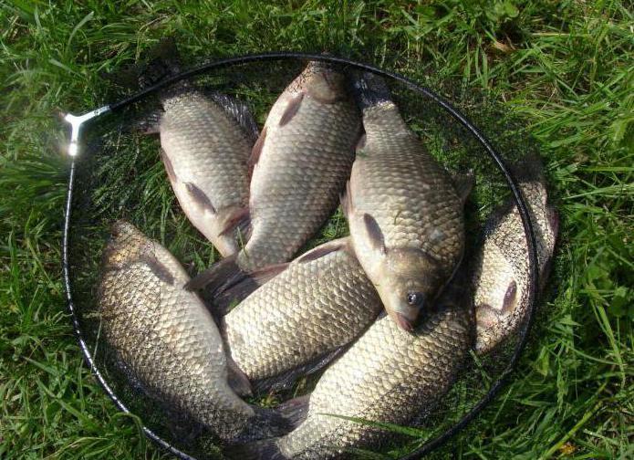 Рыбалка в дубне форум