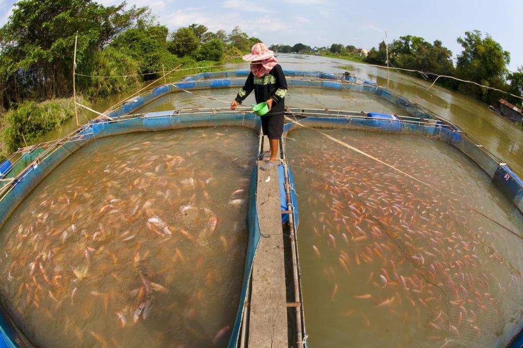 Выращивание рыбы в садках 885