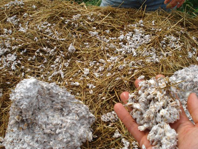 выращивание шампиньонов как бизнес отзывы фото