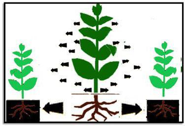 что можно посадить под яблонями в саду