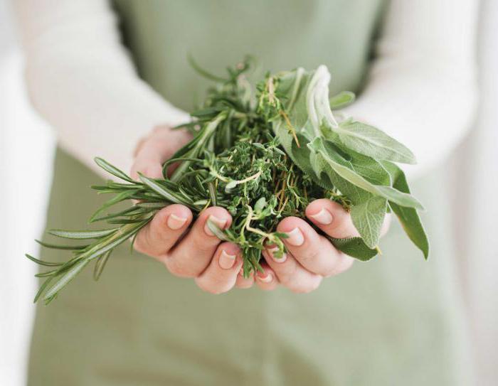 рецепт трав от паразитов