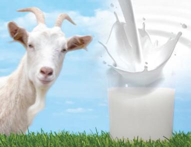 польза парного молока