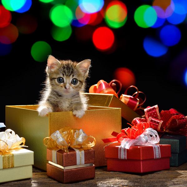 Подарки для котов на день рождения 691