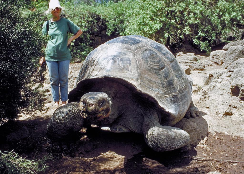 фотографии гигантских черепах юбилеем нередко изображают