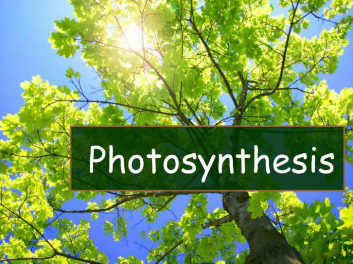 прикол про фотосинтез стерлитамаке ищут