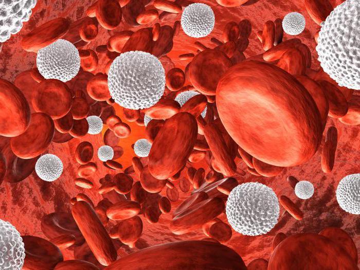 лейкоцитов много в крови