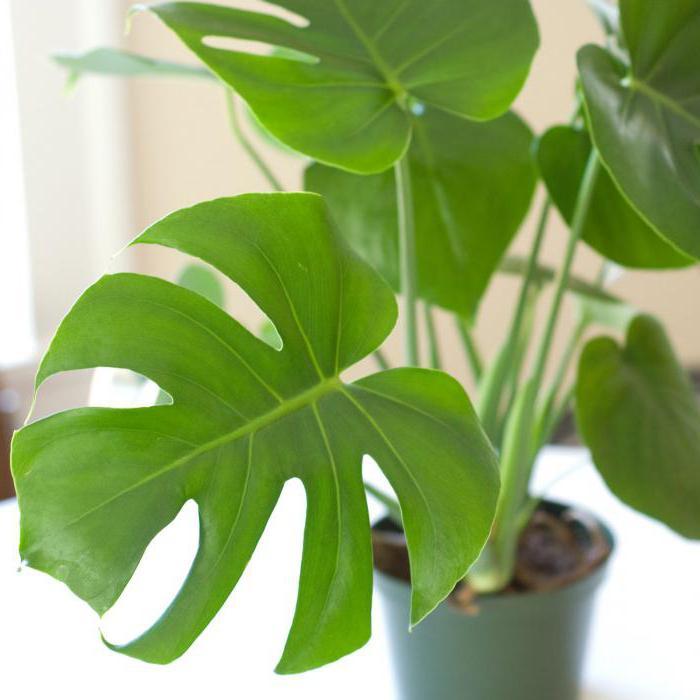 for Nombre de plantas de interior