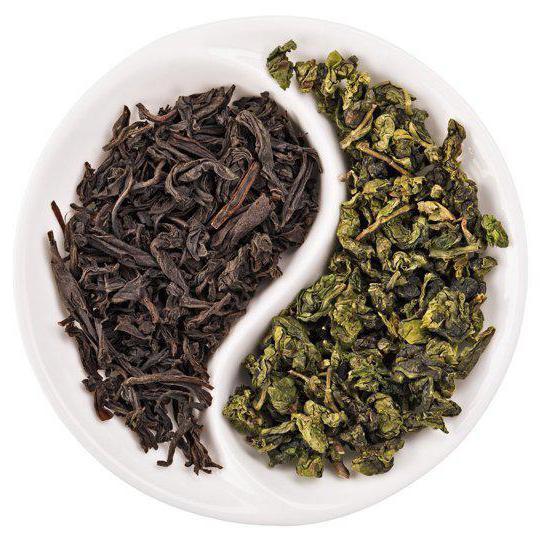 иван чай или зеленый чай какой полезнее