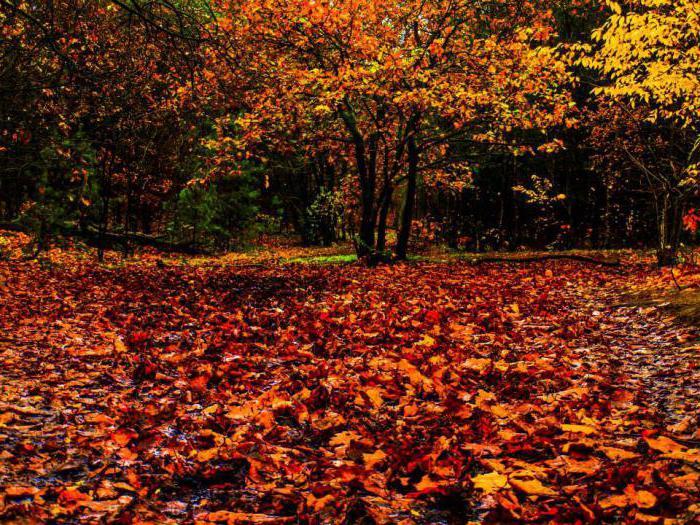 Что можно сделать из листьев своими руками фото 412