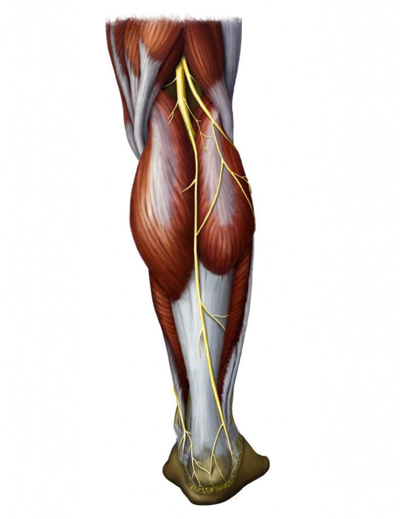 Массаж икроножных мышц: приемы, техники и рекомендации