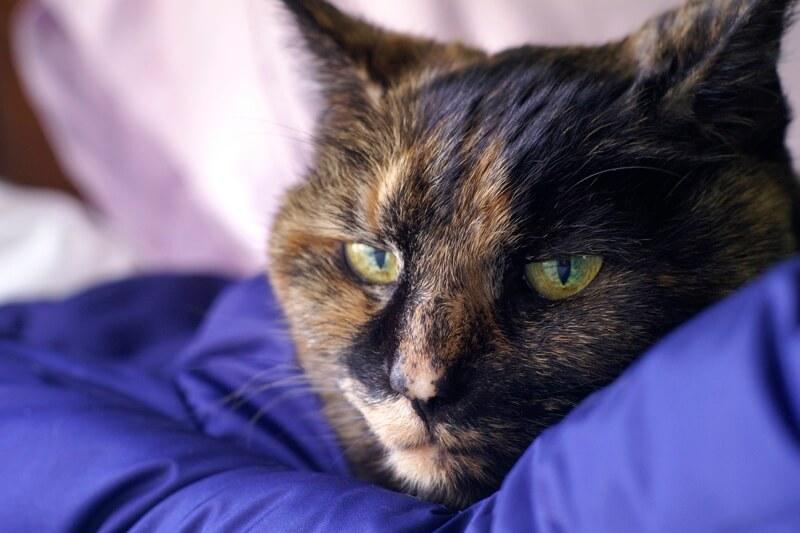 Таблетки от камней в почках для котов