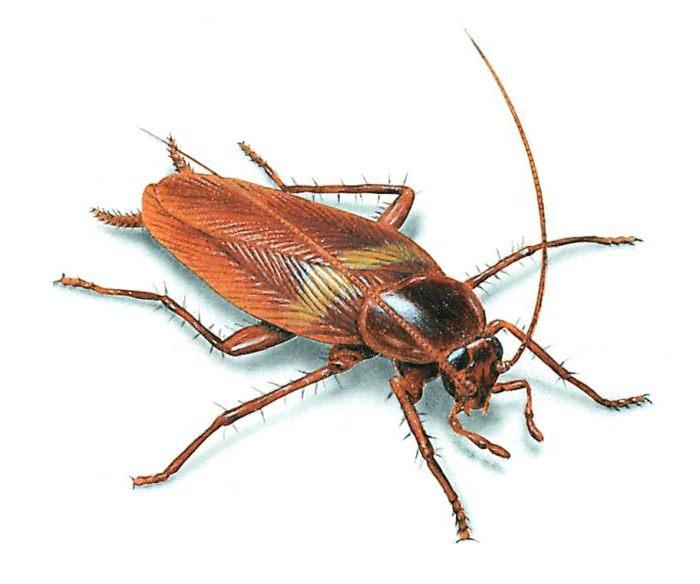 ловушки от тараканов