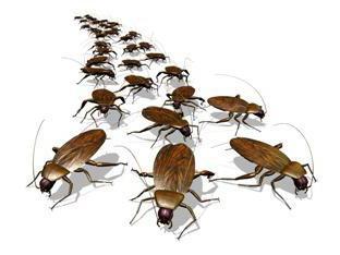 отрава для таракана