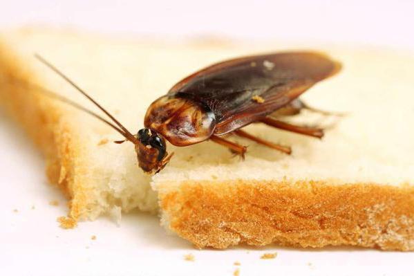 глобал от тараканов купить