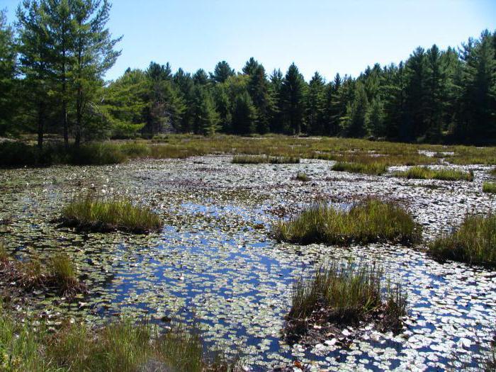 Типы питания болот